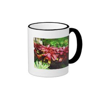 bromeliad tropical, jardín tropical de Fairchild,  Taza De Café