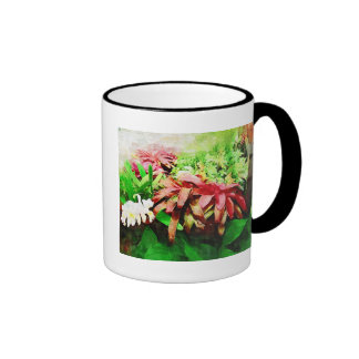 bromeliad tropical, jardín tropical de Fairchild, Taza De Dos Colores