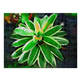 bromeliad tropical jardines tropicales de Fairchi Poster