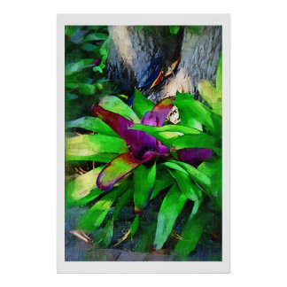Bromeliad tropical posters