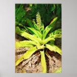 Bromeliad tropical - paseo en el jardín poster