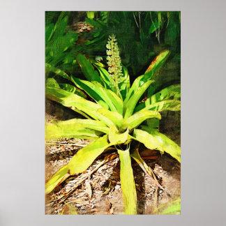Bromeliad tropical - paseo en el jardín póster