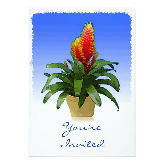 Bromeliad Vriesea Tosca Card