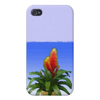 Bromeliad Vriesea Tosca iPhone 4/4S Covers