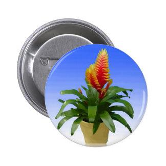 Bromeliad Vriesea Tosca Pin