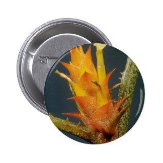 Bromeliade amarillo spp flores pin