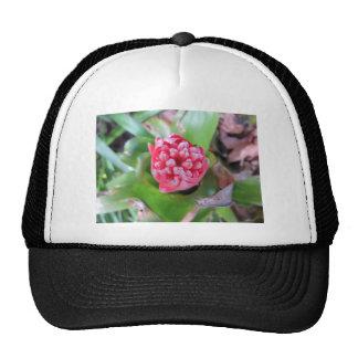 Bromeliade rojo 03 gorras de camionero