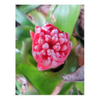 Bromeliade rojo 03 postales