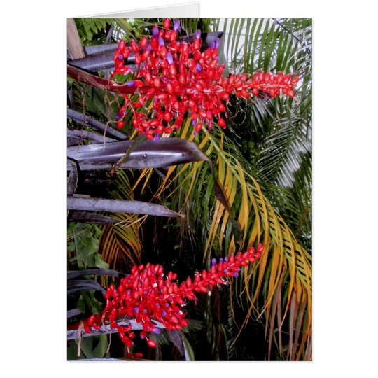Bromeliads and palms card