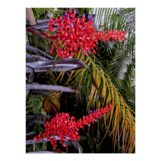 Bromeliads and palms posters