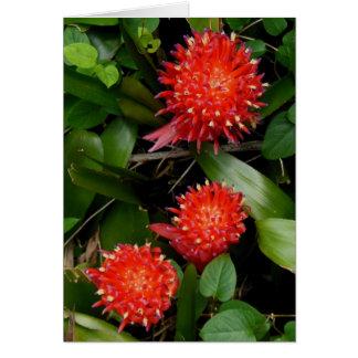 Bromeliads Card