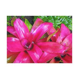 Bromeliads hawaiano lienzo envuelto para galerias