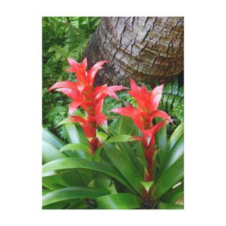 Bromeliads hawaiano lona estirada galerias