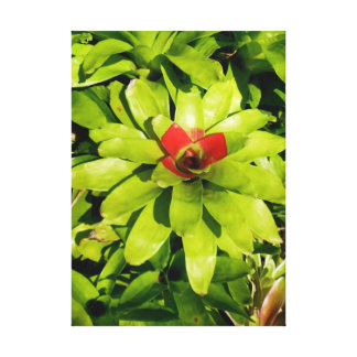 Bromeliads Impresiones De Lienzo
