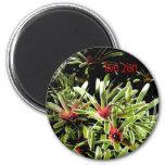 bromeliads live zen magnet