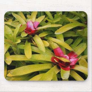 Bromeliads Mouse Pad