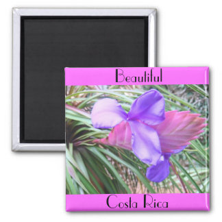 Bromeliads of Costa Rica 2 Inch Square Magnet