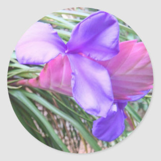 Bromeliads of Costa Rica Classic Round Sticker