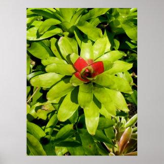 Bromeliads Impresiones