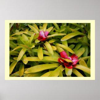 Bromeliads Póster