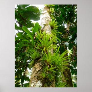 Bromeliads que crece en un tronco de árbol póster