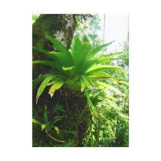 Bromeliads salvaje impresion en lona
