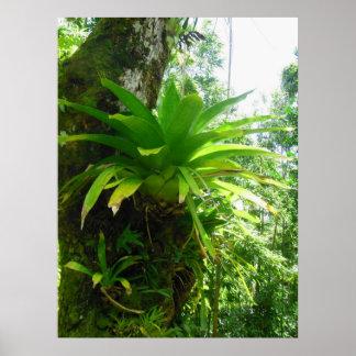 Bromeliads salvaje posters