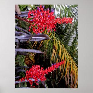 Bromeliads y palmas póster