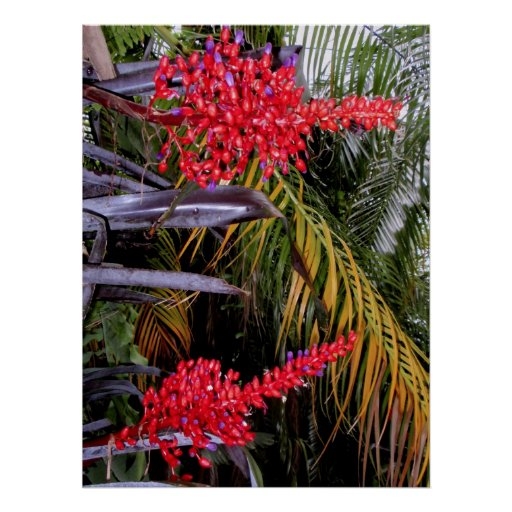 Bromeliads y palmas poster