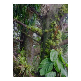 Bromeliads y Philodendron Póster