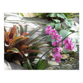 Bromeliads y postal de las orquídeas