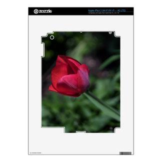 Bromista del tulipán pegatinas skins para iPad 3