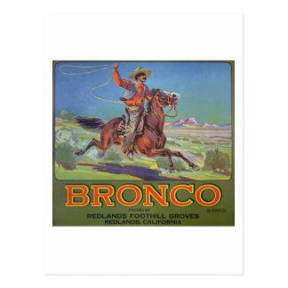 'Bronco Oranges', c.1900 (colour litho) Postcard