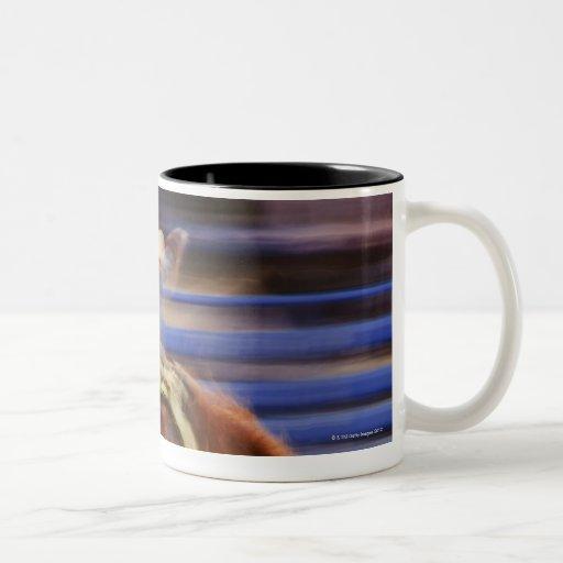 Bronco riding coffee mugs