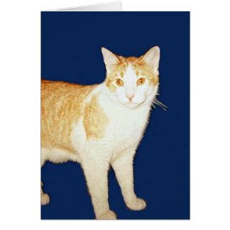 Bronco The Cat Card