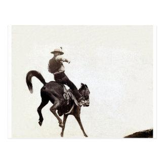 Bronco Vintage Print Postcard