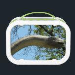 "Brontosaurus dinosaur lunch box<br><div class=""desc"">Brontosaurus dinosaur design</div>"