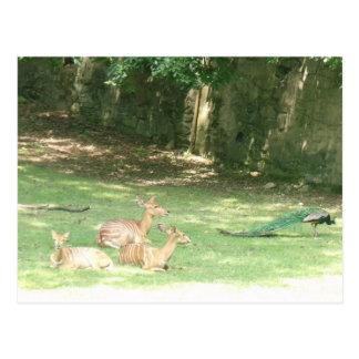 Bronx Zoo  Image Postcard