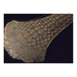 Bronze Age axe, 3500 B.C.. 5x7 Paper Invitation Card