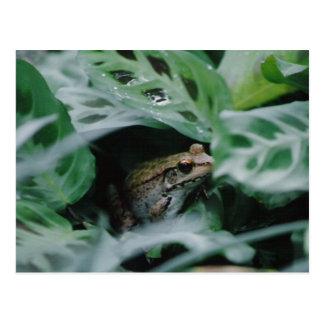 Bronze Frog in Prayer Plant Postcards