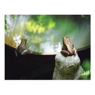 Bronze Frog Pair Reflect Postcard