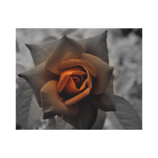 Bronze Rose by Verde Gallery Wrap Canvas