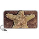Bronze Starfish Doodle Speaker
