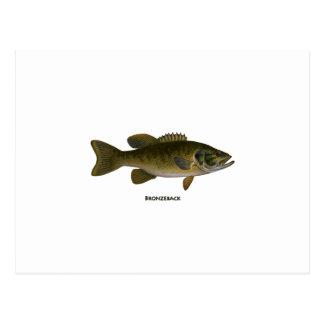 Bronzeback Bass Logo Postcard