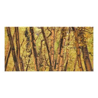 Bronzed Aspen Trunks Photo Card