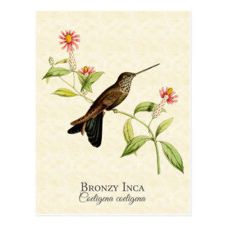 Bronzy Inca Hummingbird Vintage Art Postcard