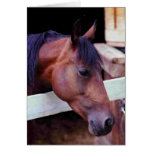 Brood Mare Greeting Cards