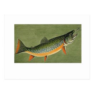 brook trout Art by Louis Agassiz Fuertes Postcard