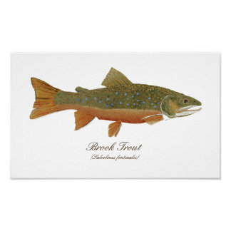 Brook Trout Art Poster