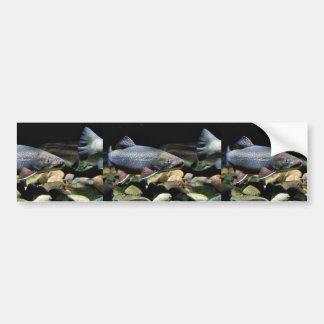 Brook trout bumper sticker